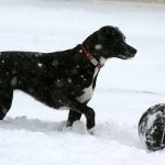 Dog playing basketball in the snow