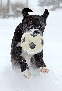 Dog playing soccer in the snow