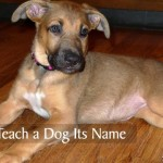 How to Teach a Dog Its Name