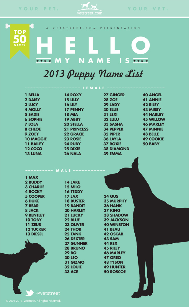Can You Change An Adopted Dog S Name
