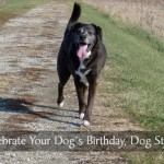 Celebrate Your Dog's Birthday, Dog Style
