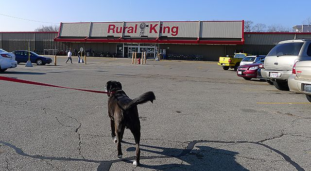 Dog Friendly Stores - Rural King