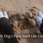 Dog Paws in Sand