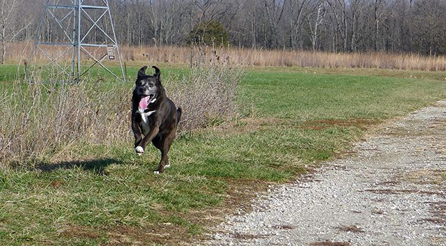 Dog Running Off-leash