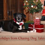 Happy Holidays from Chasing Dog Tales
