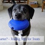 Do Dogs Barter?