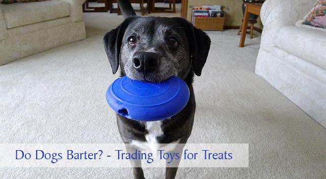 Do Dogs Barter?