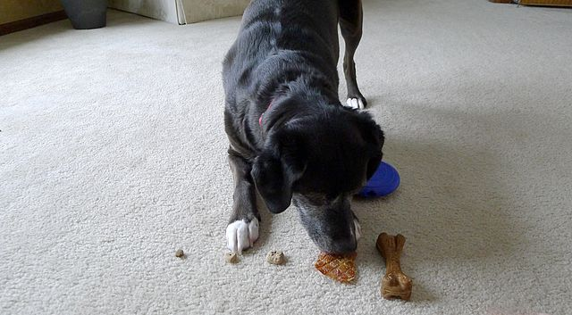 Do Dogs Barter? - Trading Toys for Treats