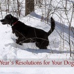 2015 New Year's Resolutions for Your Dog