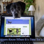 How Pet Bloggers Know When It's Time for a Break