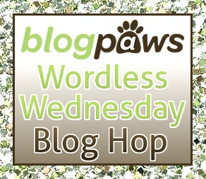 BlogPaw's Wordless Wednesday