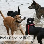 Are Dog Parks Good or Bad?