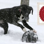 The Liebster Award - Chasing Dog Tales