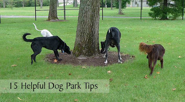 15 Helpful Dog Park Tips