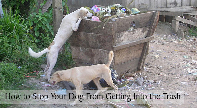 How to Stop Your Dog From Getting Into the Trash