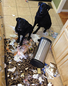Two Dog Getting Into the Trash Can