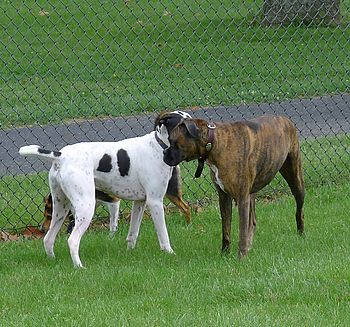 Two Dogs at the Dog Park