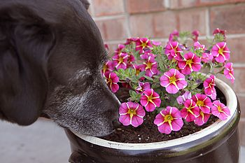 Do Dogs Get Spring Fever?
