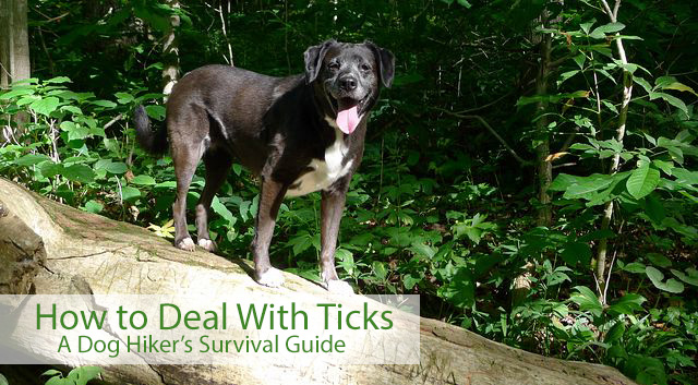 How to Deal With Ticks