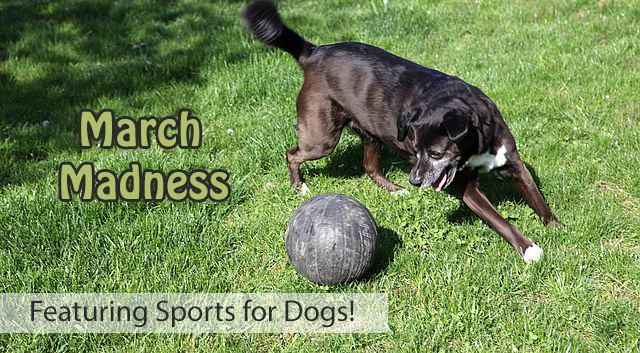 March Madness - Sports for Dogs