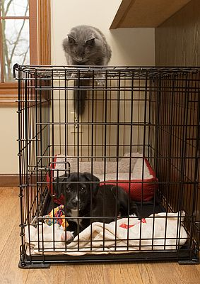 Puppy in Crate With Cat