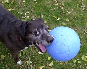 Dog and One World Futbol