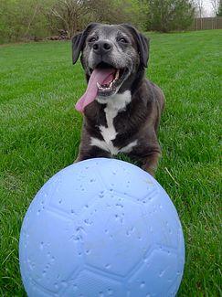Dog with One World Futbol