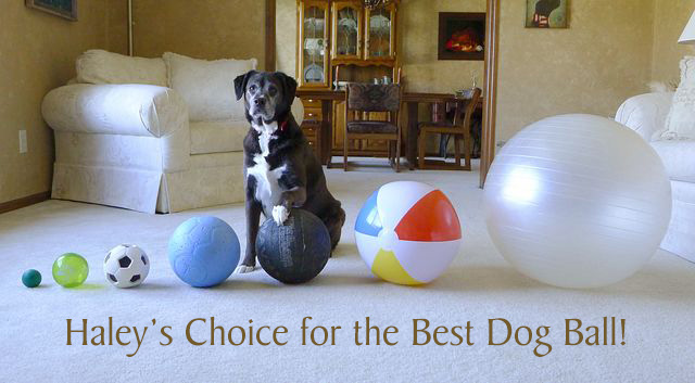 Haley's Choice for the Best Dog Ball