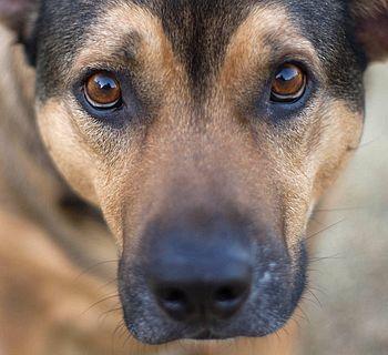 Dog Stare