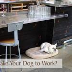 Do You Take Your Dog to Work?