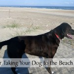 15 Tips for Taking Your Dog to the Beach