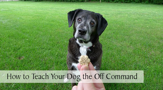 How to Teach Your Dog the Off Command