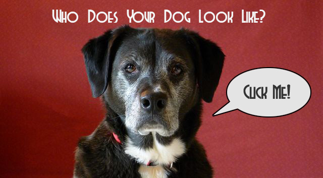 Who Does Your Dog Look Like?