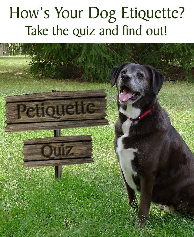 Check Your Petiquette Quiz!