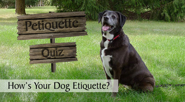 Check Your Petiquette - How's Your Dog Etiquette?
