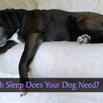 How much sleep does your dog need?