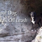 How to Train Your Dog to Walk Off Leash