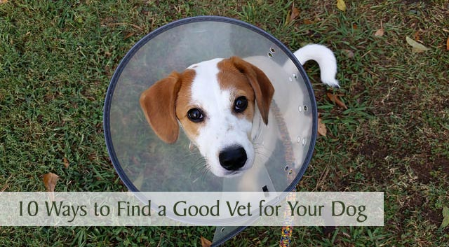 10 Ways to Find a Good Vet for Your Dog