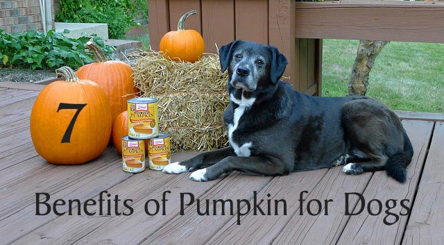 7 Benefits of Pumpkin for Dogs