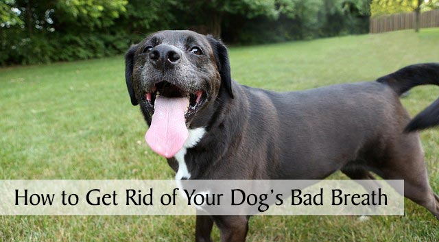 How to Get Rid of Your Dog's Bad Breath