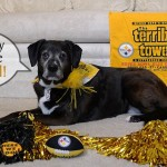 Is Your Dog Ready for Some Football?