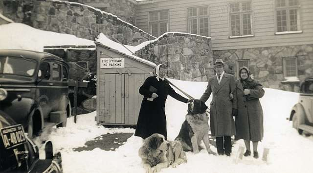Vintage Couple With St. Bernard Dogs