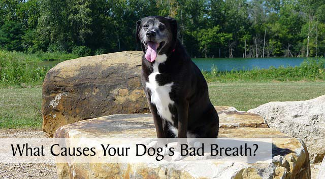 What Causes Your Dog's Bad Breath?