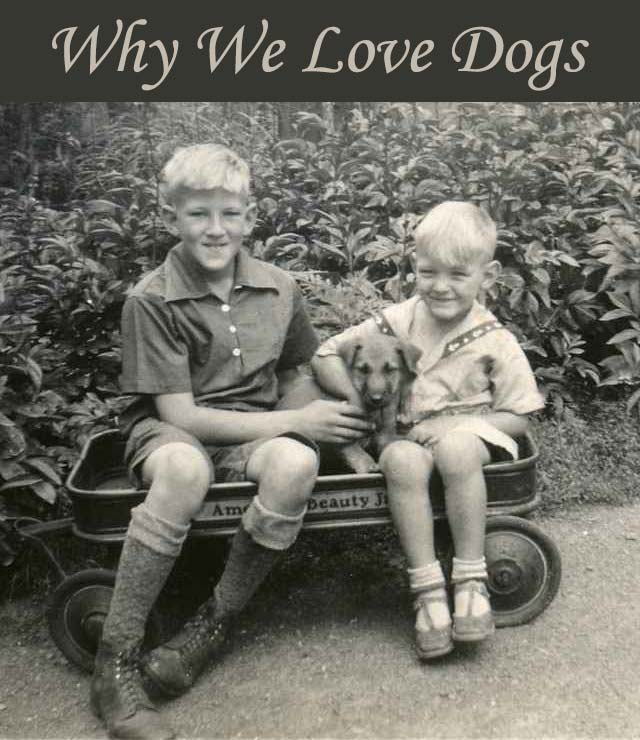 Why We Love Dogs