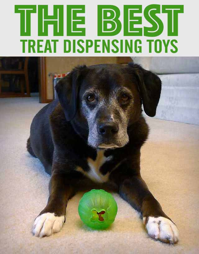 The Best Treat Dispensing Toys