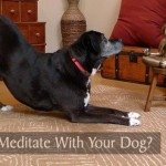 Can You Meditate With Your Dog?