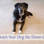 How to Teach Your Dog the Down Command
