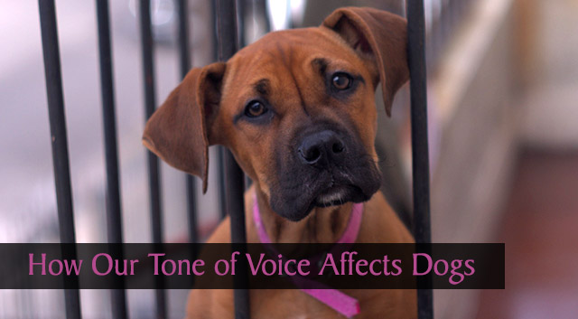 How Our Tone of Voice Affects Dogs