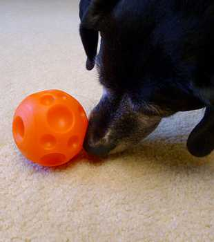 "Toys ""R"" Us Ball Treat Dispenser Dog Toy"