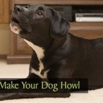 How to Make Your Dog Howl
